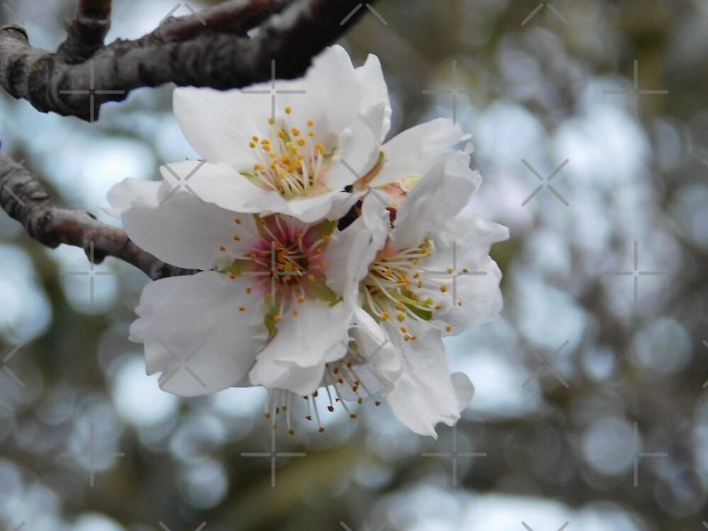 Flower  by Mobbsy99