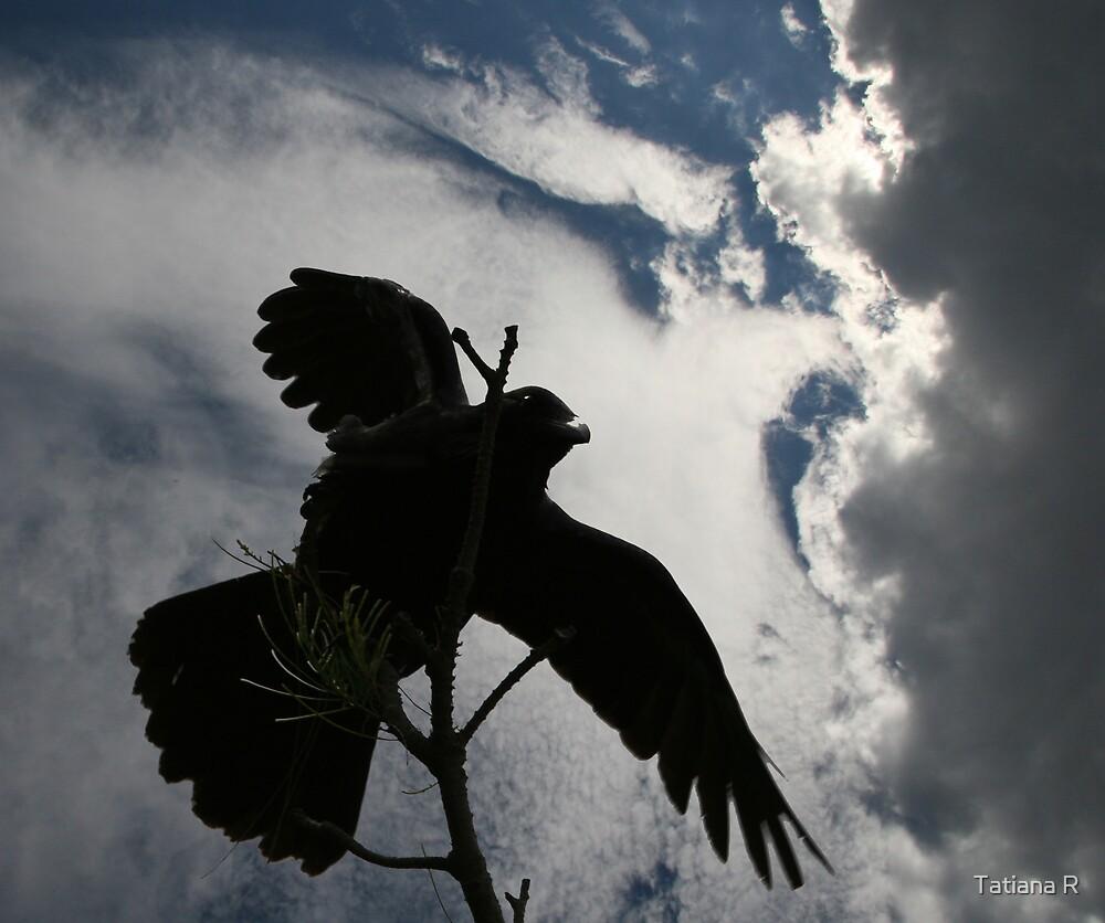 Raven's shadow by Tatiana R