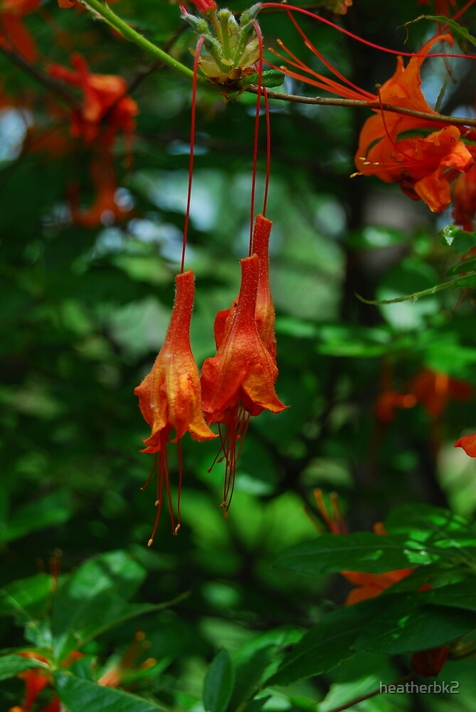 Flower drops by Heather Brink