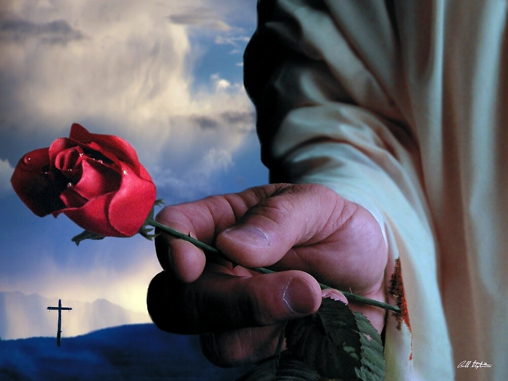 The Rose by Bill Stephens