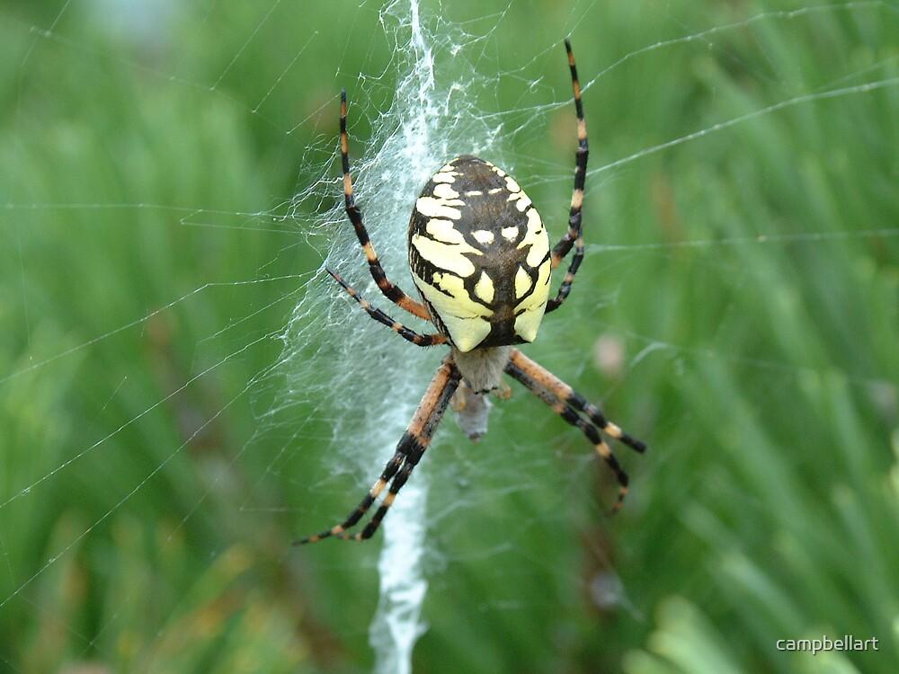 Mr. Spider by campbellart