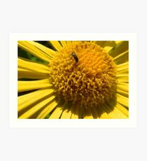 Insect struggle Art Print