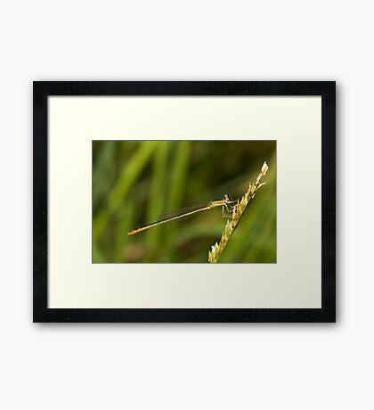 Damsel Framed Print