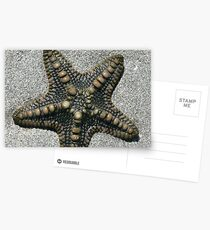 Starfish Postcards