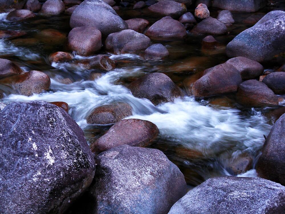 Daintree Lifestream by thereisnosquare