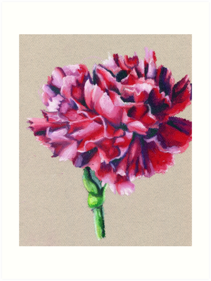 Carnation Blossom- Oil Pastel Art - Floral Art by Shannon Connolly