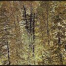 Trees ! by Elfriede Fulda