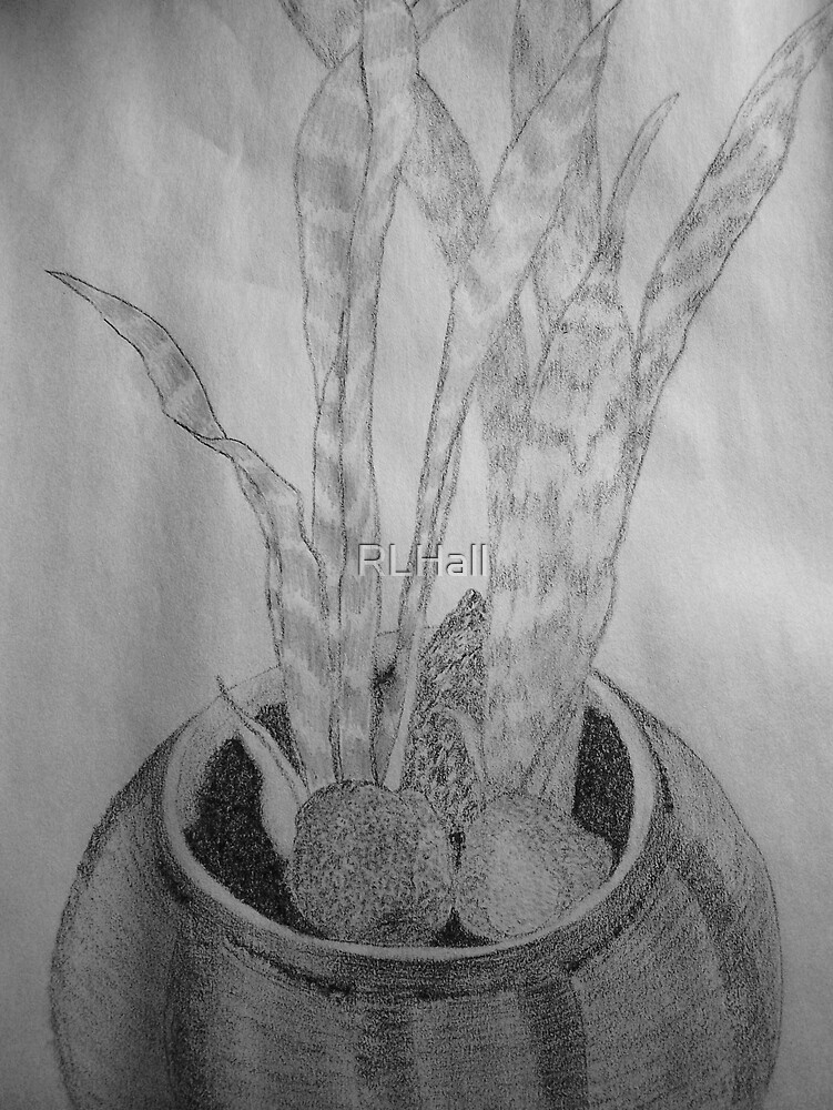 Snake Plant by RLHall