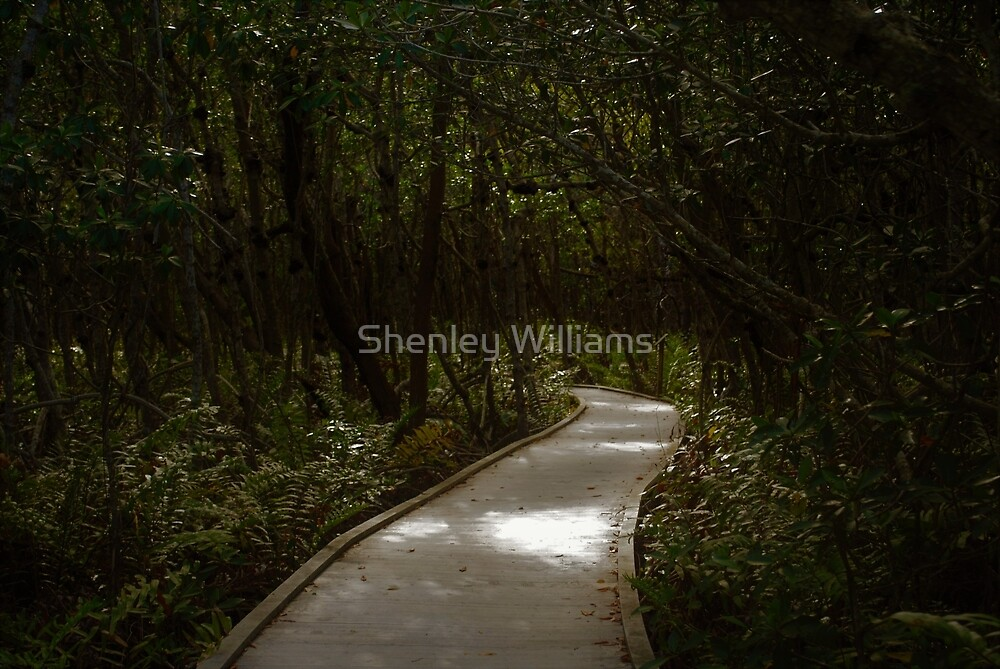 The Path by Shenley Williams