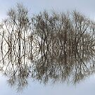 Mirrored Trees by Mike Solomonson