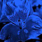 In Blau von Evita