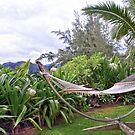 Hawaiian Hammock by Catherine Sherman