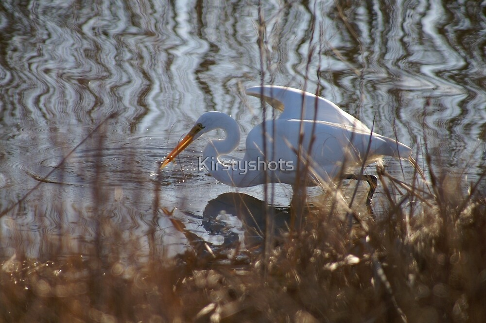 In the Reeds by Kirstyshots