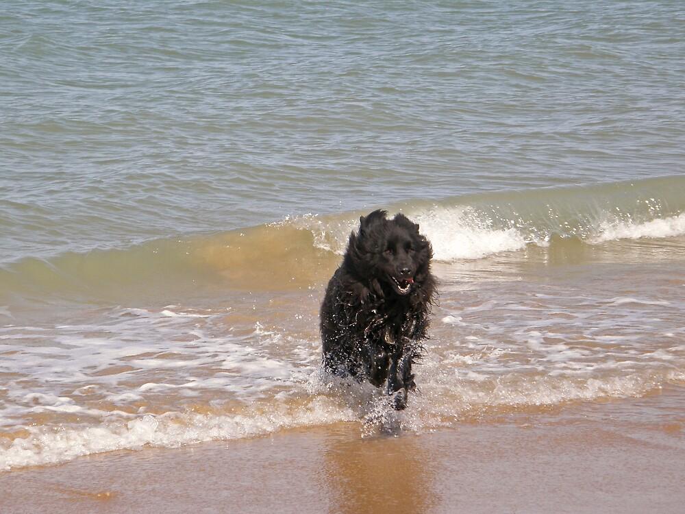 Sea Dog by Catherine Beldon