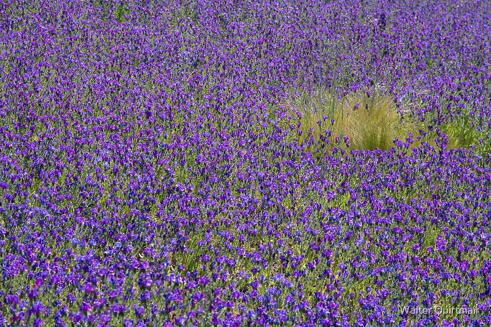 Spring Dream by Walter Quirtmair