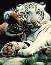 animal love by seekerz