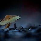 One Lonely Mushroom by Tamara Brandy