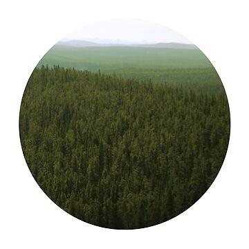 Forest by MisterKeet