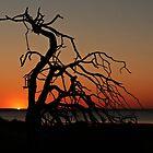 Eucla Sunset by myraj