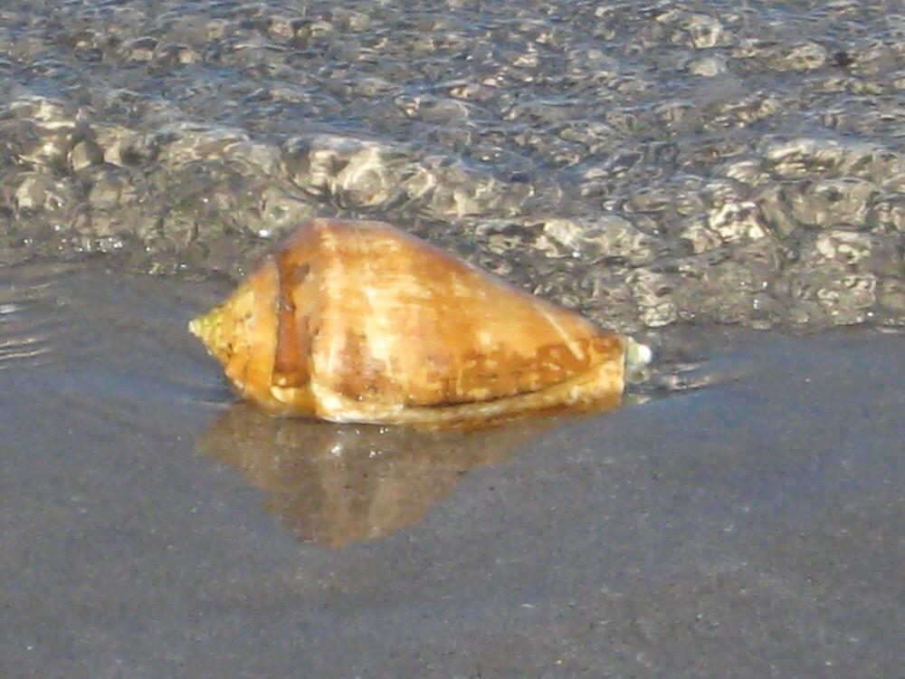 Shell by Guss  Espolt