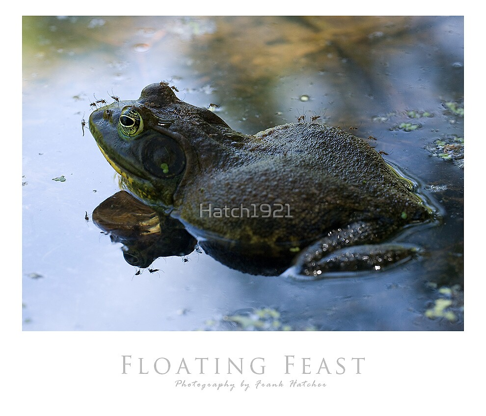 Floating Feast  by Hatch1921