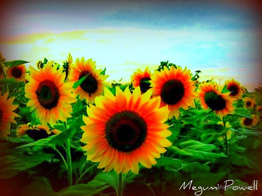 Sunflower Field by Megumi Powell