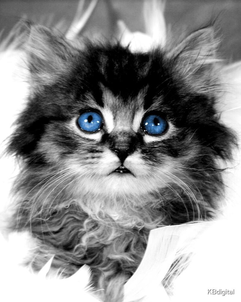 Bella Blue.  by KBdigital