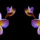 Vibrant Jasmine Duet by haymelter