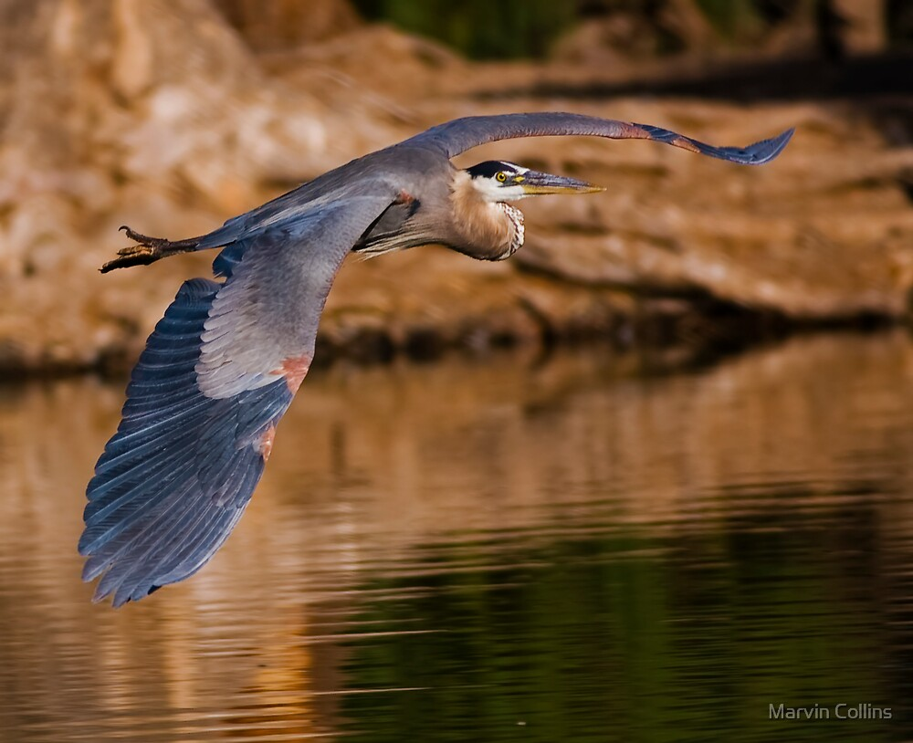 Wingspan II by Marvin Collins