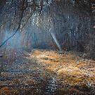Light by nguyen