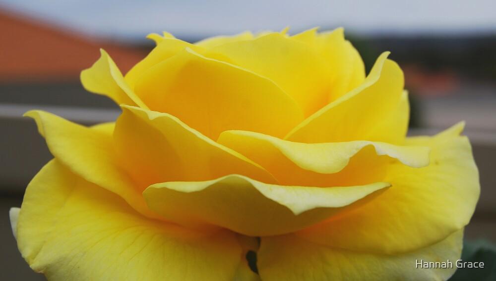 Happy Petals by Hannah Grace