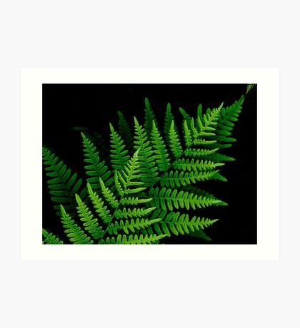 fantastic fern fronds Art Print