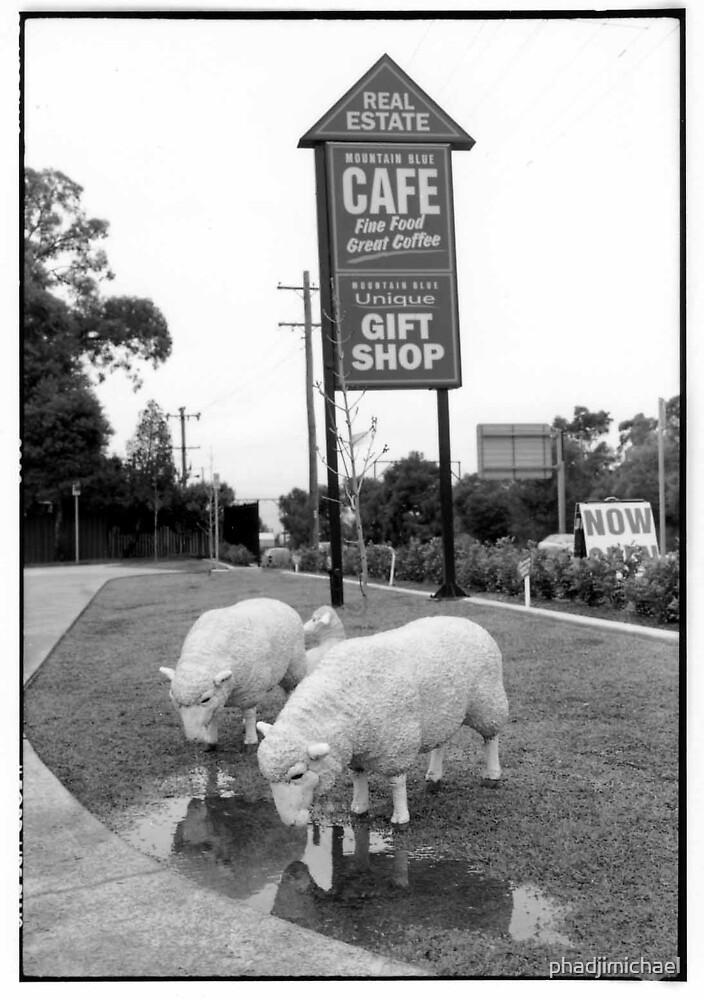 Sheep Cafe 1 by phadjimichael