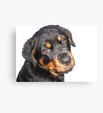 Female Rottweiler Puppy Making Eye Contact Vector  Canvas Print