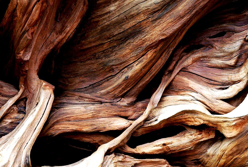wood by clare scott