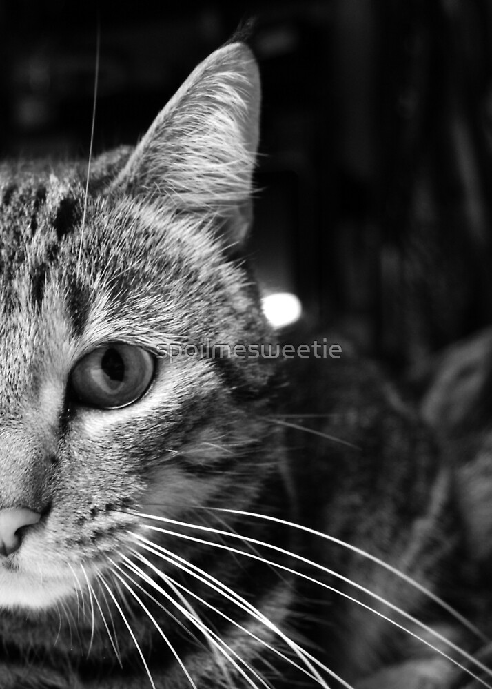 Close Up Cat 8 by spoilmesweetie