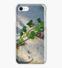 Ivy in abandoned guesthouse iPhone Case/Skin