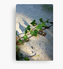 Ivy in abandoned guesthouse Canvas Print