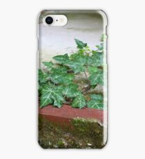 Ivy in abandoned guesthouse 2 iPhone Case/Skin