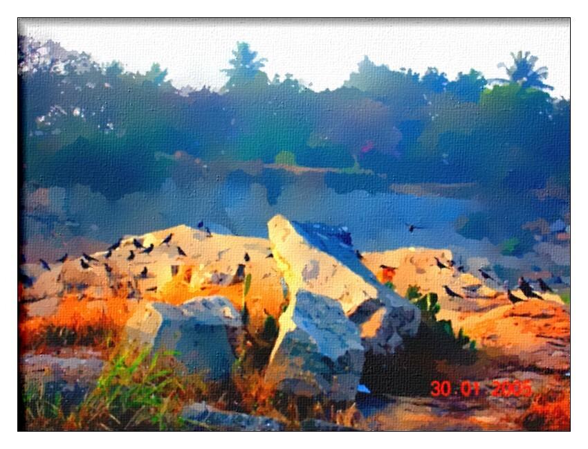 Crows by nisheedhi