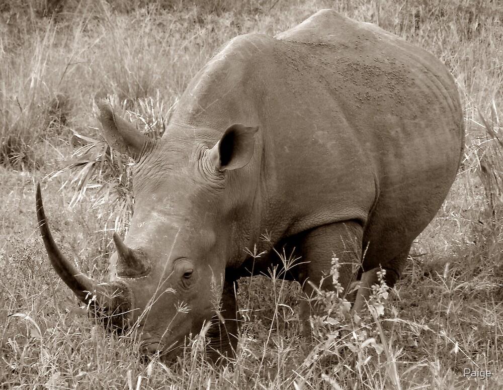 The Safari Series - 'Rhino' by Paige