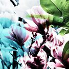 Magnolia 02 von froileinjuno