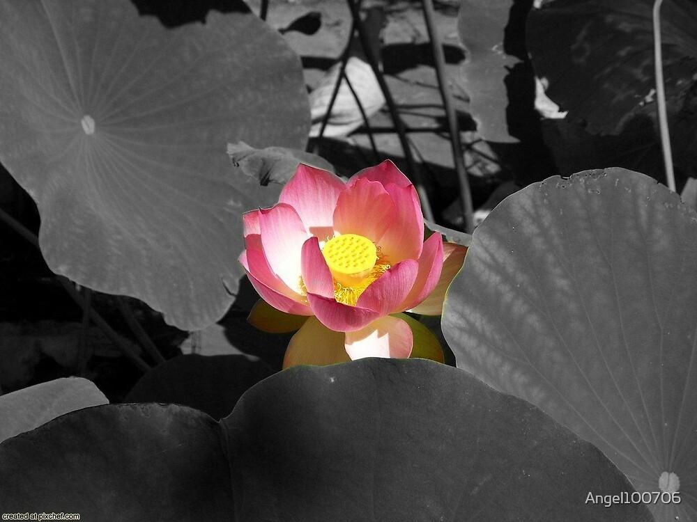 Flower. . . by Angel100706