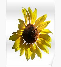 A Sunny Flower Poster