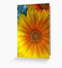 Gazania Flowers Photography, Golden Sunburst Greeting Card