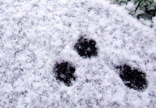 Cold feet. by A Duerden