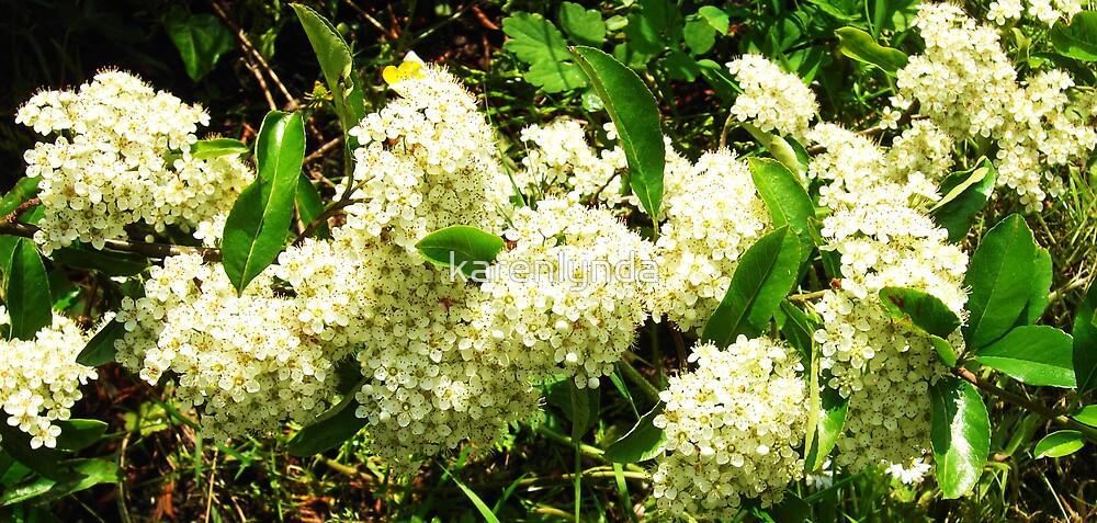 White blossom by karenlynda