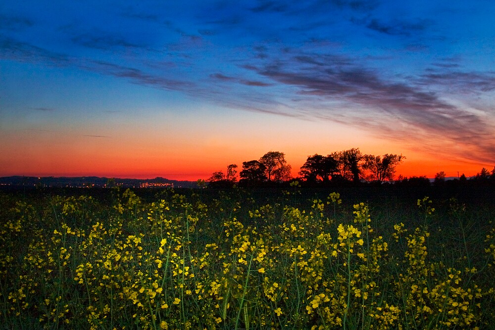 Sunset Over the Rape Fields by Chris Clark