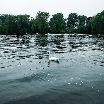 Lonely Swan by marderofski