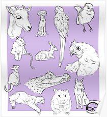 Animals Poster